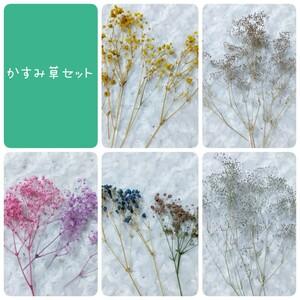花材セット かすみ草アソート
