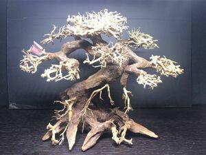 高級盆栽流木 F009