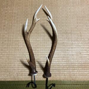鹿の角 ランタンハンガー 31