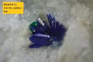 ★【木曜終了】国産鉱物 静岡県河津鉱山の藍銅鉱(美しい放射状結晶!!)★
