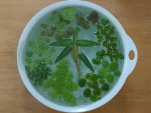 浮き草 セット 10種 ネコポス便 無農薬 補償付き