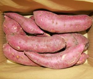 無肥料 無農薬 さつま芋(約2.5kg)☆自然の恵みが詰まったいやしの野菜☆熊本県で自然と共生する農法を20年以上続けてきました☆