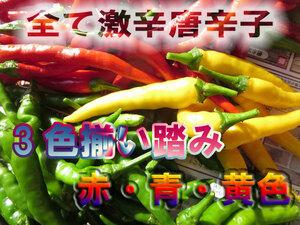 味比べ 激辛 生・赤・青・黄色 3色唐辛子セット 合計200g 無農薬栽培 生とうがらし