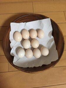 ★有精卵★ 白 黒 烏骨鶏 10個 セット