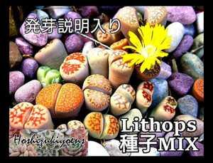 【今が蒔時】リトープス ミックス 種子 200粒+α 発芽説明入り