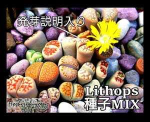 【今が蒔時】リトープス mix種子 100粒 発芽説明入り