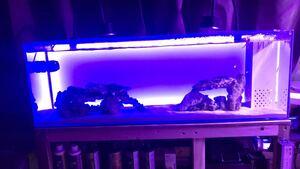 GEX 90センチスリム オーバーフロー水槽 セット海水魚