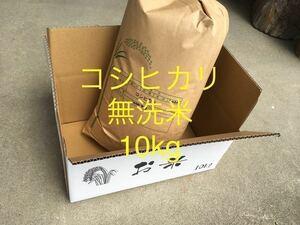 【1円スタート】在庫処分 令和2年産 コシヒカリ 無洗米 10kg  (No.9)