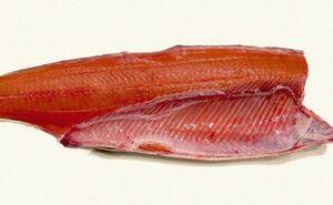 北海道産秋鮭生フィレ6kg前後(6枚前後)〔B〕北港直販☆しゃけ・鮭・魚〔代引き不可〕