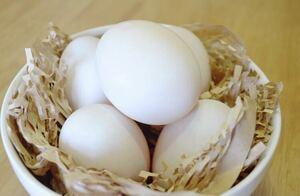 送料込 【有精卵】フランス鴨(バルバリー種) 12個
