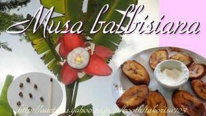 7/4新入荷!レア芳醇食用バナナ■スイートバルビシアナバナナ 種子15個 Musa balbisiana **ц** ⑪