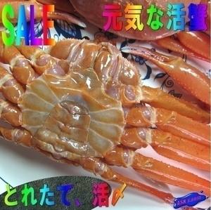 プロ用「活蟹2kg位」-活〆大サイズ5尾入り- 刺し・焼き・鍋・蒸し何でも!!