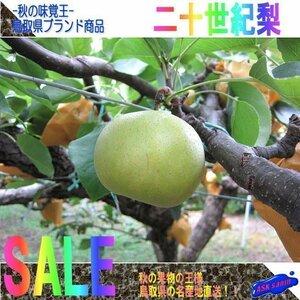 予約販売【10本】秋の味覚王、二十世紀梨「規格外品20玉」■産地直送■