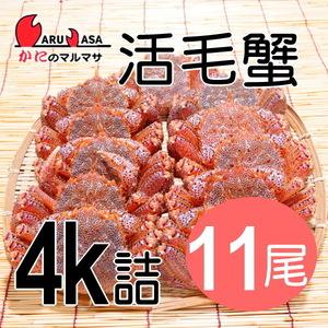【かにのマルマサ】活蟹専門店 北海道産 活毛ガニ4キロ詰11尾セット