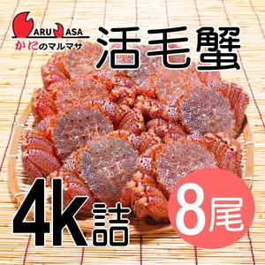 【かにのマルマサ】活蟹専門店 北海道産 活毛ガニ4キロ詰8尾セット