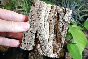 5個 ミニ コルク 8×10cm(厚約17-20mm)洋蘭 原種 チランジア エアープランツ 熱帯植物 ラン コルク 樹皮