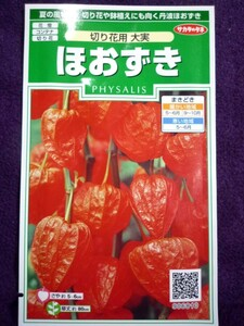 ★種子★ ほおずき 切り花用 大実 サカタのタネ 22.05 (ゆうパケット便可能)