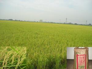 ★ 新米 ★ 令和3年産コシヒカリ(100%) ★ 農家直送 ★ 減農薬&有機肥料使用米 ★ 玄米 30Kg ★