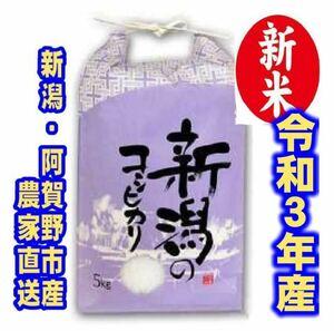 新米・令和3年産新潟コシヒカリ 白米5kg×1袋★農家直送★色彩選別済
