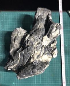 龍王石 アクアリウム 石組レイアウト ADA 親石
