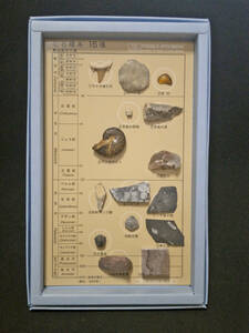ископаемые образцы 15 видов (в бумажной коробке) акулий зуб янтарь амонайт трилобит динозавр кости ит.д.