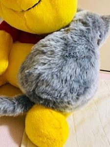 癒し系 ミャウエバーMeowEver 猫型クッション