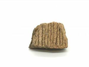 【ペトロ遺跡 陶片集】 土器片 彩色 彩文 ヨルダン 世界遺産         L0325F