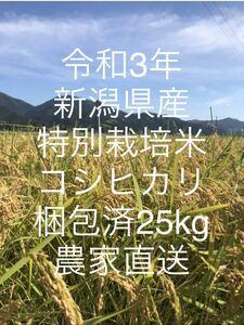 【新米】令和3年!新潟県産特別栽培米コシヒカリ玄米!梱包済25kg★農家直送★