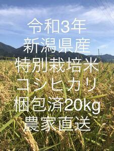 【新米】令和3年!新潟県産特別栽培米コシヒカリ玄米!20kg!農家直送!