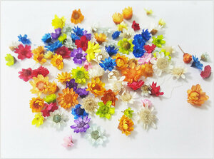 ★白棚DF-10【約90枚セット】スターフラワー 生花を使用したドライフラワー ランダム 約90枚★
