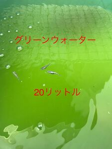グリーンウォーター【青水】20リットル