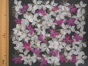 [ быстрое решение * вдавлено цветок материалы ] Haku chou saw ( White Butterfly .) ⑧