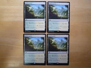 MTG XLN 陽花弁の木立ち/Sunpetal Grove 日本語 4枚