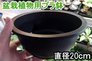 浅型 硬質 プラ鉢 1個 盆栽 塊根植物 アデニウム プラスチック 製 鉢 ポット コーデックス パキプス グラキリス