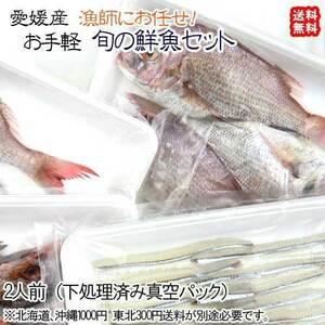 愛媛 漁師におまかせ ( お手軽鮮魚セット ) 2人前 刺身 煮魚 焼魚 下処理済み 送料無料 宇和海の幸問屋