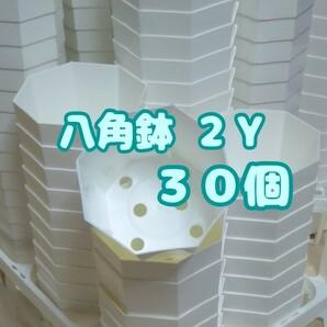 プラ八角鉢 カネヤ【2Y】30個 多肉植物 植木鉢 プレステラ