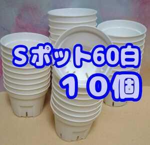 Sポット60 白 10個 スリット鉢 プラ鉢 2号 6cm プレステラ 丸型 多肉植物