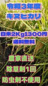 令和3年産新米キヌヒカリ白米2Kg1300円送料無料。除草剤1回 防虫剤不使用、体にやさしいお米ですo