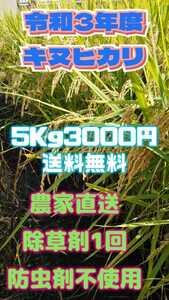 令和3年産新米キヌヒカリ白米5Kg3000円送料無料。除草剤1回 防虫剤不使用、体にやさしいお米ですo
