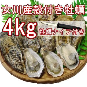 【産地直送】冷凍殻付き牡蠣 加熱用 Lサイズ 4kg(30個前後) 宮城県女川産 牡蠣ナイフ、軍手付き COL-OO4_11