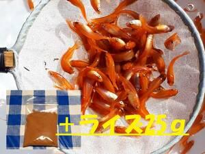 餌セット50匹:最高品質!! 紅帝楊貴妃メダカ・3cm(ヤマト80サイズ)