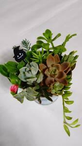★かわいい多肉植物 ハロウィン仕様①★ちまちま寄せ植え カット苗 観葉植物 卓上インテリア
