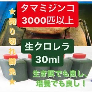 厳選タマミジンコ培養セット! 3000匹以上+生クロレラ30ml おまけグリーンウォーター メダカ、金魚、ゾウリムシ、PSB、めだか