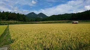 令和3年度 新米 山形産 ひとめぼれ 玄米10キロ(白米9キロ)