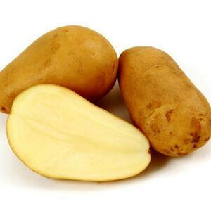 さんきん〓日常の一般野菜 じゃがいも ジャガイモ 馬鈴薯 メークイン 1kg