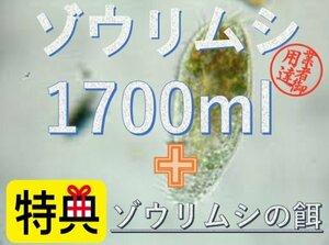ゾウリムシ 1700ml+エサ付き★送料無料★メダカ 稚魚 針子 めだか 活餌 エサ ミジンコPSB光合成細菌と同梱可 エビ ビーシュリンプ