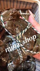 市場直送 新鮮 活き上海蟹~(冷蔵発送)送料無料メス(母) 130g 一箱2.5kg19匹ぐらい