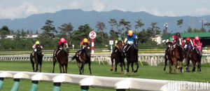 *.... not horse racing commerce material! horse racing beginner also horse racing .. middle . profit ... ultimate method! horse racing . The k The k.........!