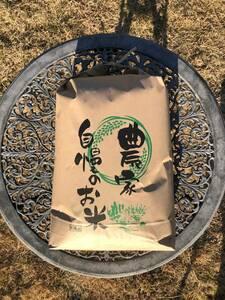 送料無料 令和3年度産 白米 京都丹波産コシヒカリ10kg 美味しいお米