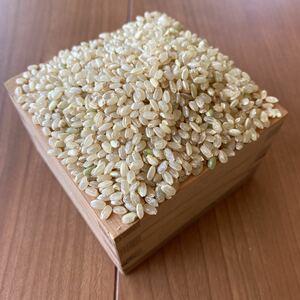 令和2年京都産 コシヒカリ玄米10kg